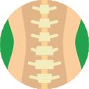 spinal-column